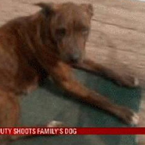 Deputy Opens Fire on Family's Handicapped, Toothless Dog