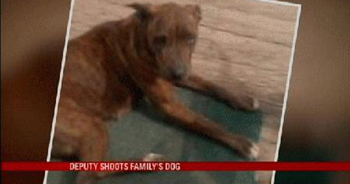 The dog was toothless, old, and can hardly move. Photo via WPMI Local 15 News