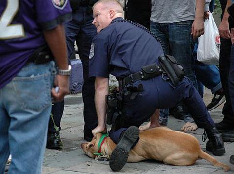 cop kills dog