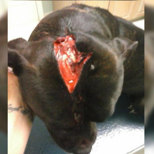 Family pet shot in the head by plainclothes cops searching at wrong address