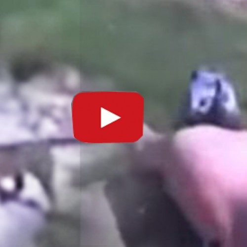 SHOCK VIDEO: COP CALLS DOG OVER BEFORE POINT BLANK EXECUTION