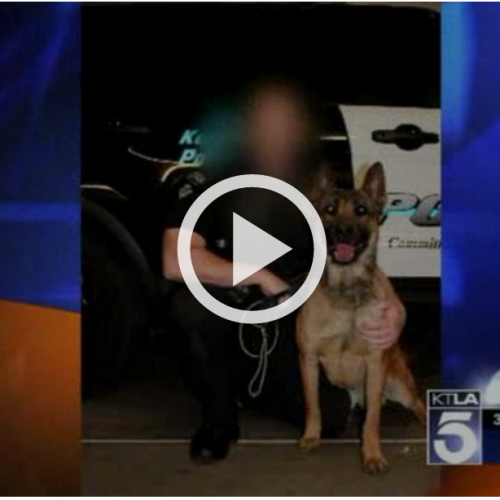 Cop Lets His Attack Dog Loose, 4-yr-old Child is Mauled So Badly that His Leg is Amputated