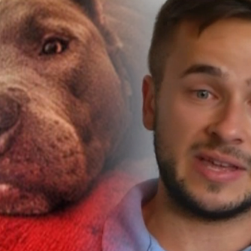 Man Heartbroken After Cop Shoots Service Dog in the Head – Dog Helped Down Syndrome Children