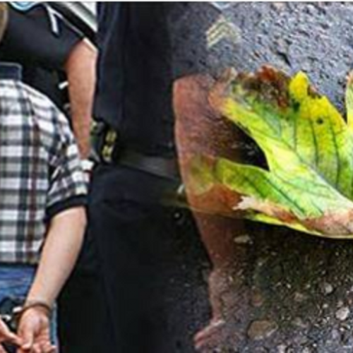 "Parents Outraged After Cop Charges 11-Yr-Old Child With ""Possession"" for Having a Leaf that ""Looked Like"" Marijuana, Kicked Out of School for a Year"