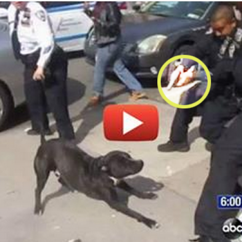 WATCH: Cops Lose It, Open Fire on Dog in Public After Witnesses Call Out Their Mistake