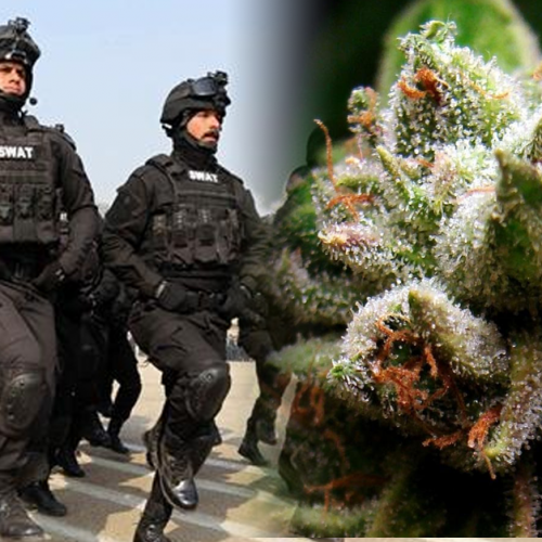 """Tremendous Failure:"" Will Top Cops End the Drug War?"