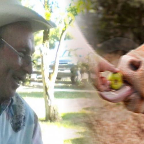 This Peaceful 62-Yr-Old Rancher Was Just Gunned Down, Killed by Police After Trying to Protect a Bull