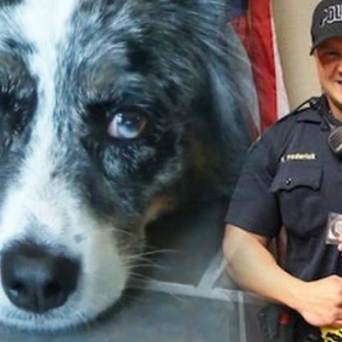 Instead of Shooting a Dog that Just Bit Him, This Cop Soothed It and Set the Bar for Cops Nationwide