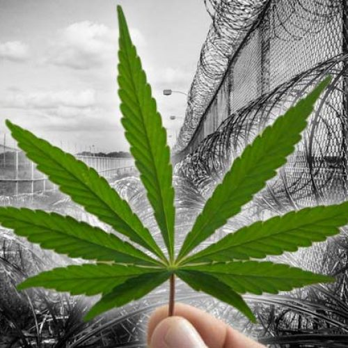 A Lone Politician Just Voted Down Legal Cannabis — Turns Out He Profits From Mass Incarceration
