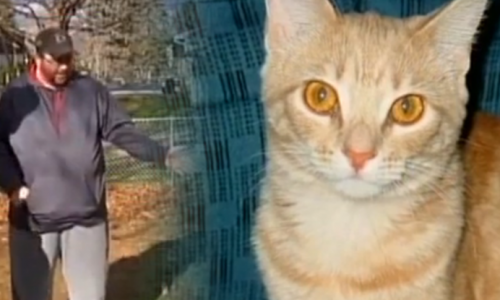"""Cop Shoots Family's Cat to Death and Then Orders Them to """"Clean Up the Mess"""""""