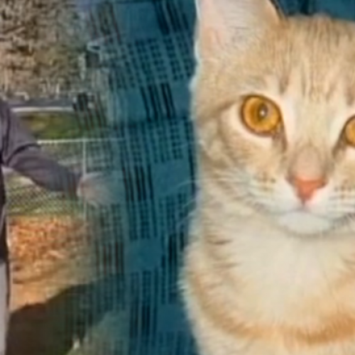 "Cop Shoots Family's Cat to Death and Then Orders Them to ""Clean Up the Mess"""