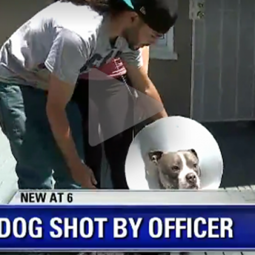Couple Furious After Cops Go to Wrong Home and Shoot their Dog, Ridicule them for Grieving
