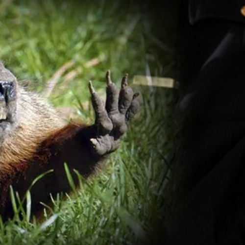 SADISTIC: Cops Crush Tiny Groundhog, Run Over its Body With Golf Cart for Fun – Report