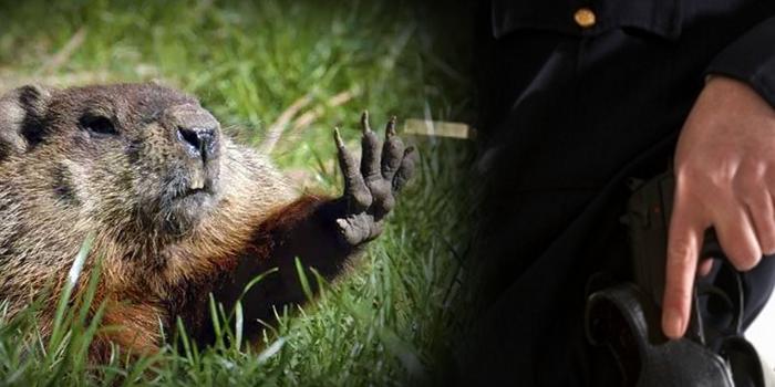fcgroundhog