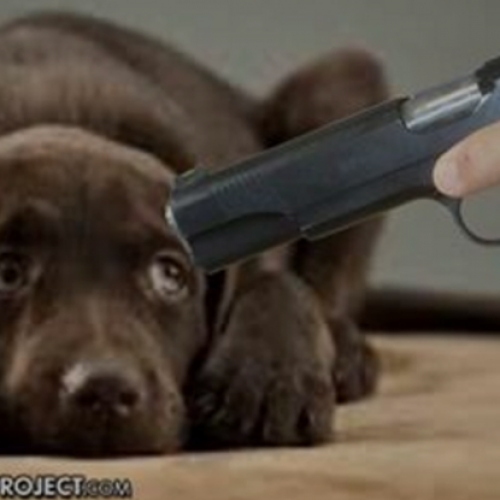 Court Rules Police Can Legally Execute Your Dog if It Does Anything But Sit Silently