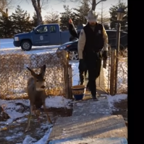 Officers Declare Family's Beloved Pet Deer 'Illegal' — Promptly Kill it In Front of Them