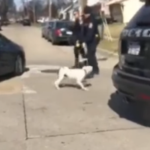 Viral Footage Shows Cops Tasing Dog After It Escaped Backyard