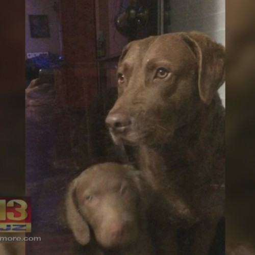 Jury Awards $1.26 Million For Dog Shot And Killed By Police Officer