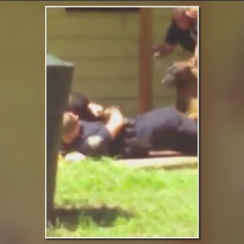 Video: Bartow Police Under Investigation for Releasing K9 on Unarmed Man