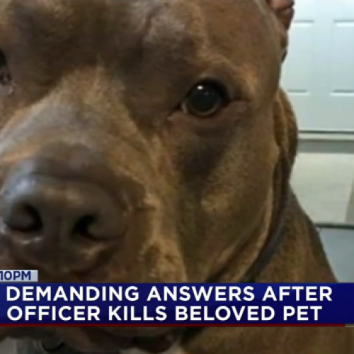News Video: Family Demands Answers After Police Fatally Shoot Dog at Party