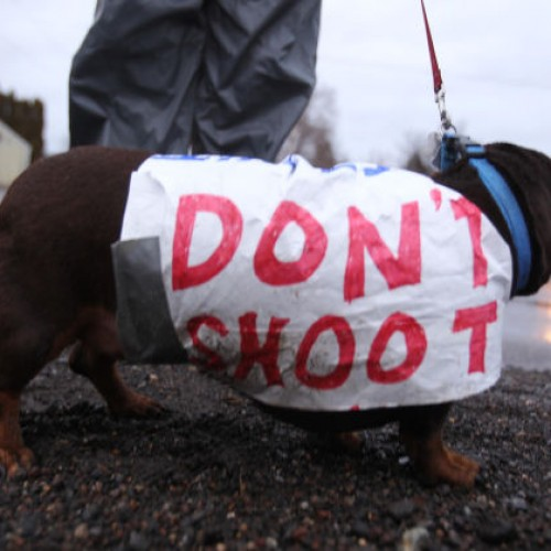 Detroit Police Sued Again For Shooting Dogs During a Marijuana Raid