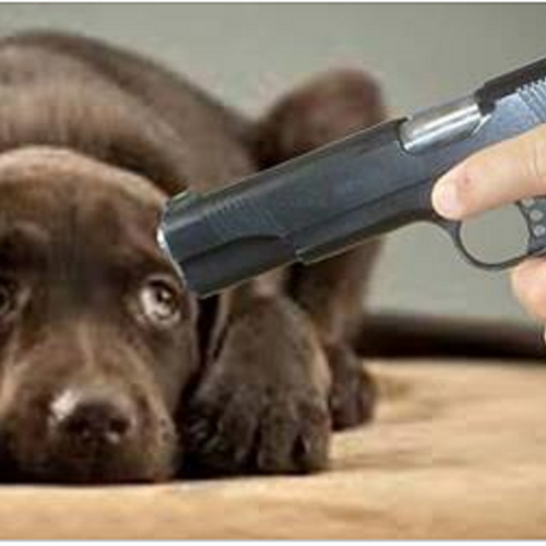 Federal Court Rules Police Can Shoot a Dog if it Moves or Barks When Officer Enters Home