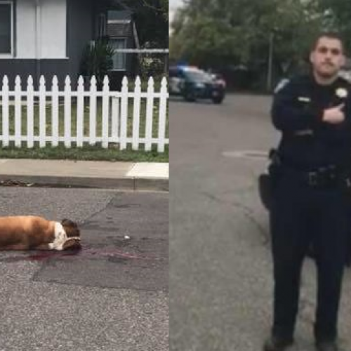Witness Accounts Clash With Police Report in Shooting of 2 St. Bernard Dogs