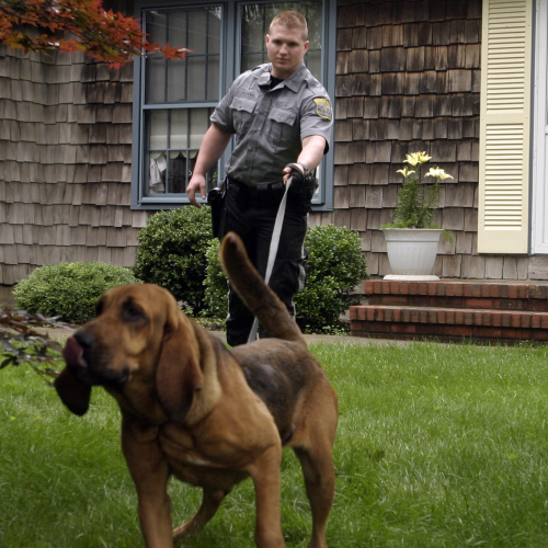 Ocean County Sheriff's Officer Admits Stealing Cocaine Used For Canine Training