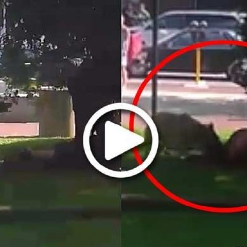 Disturbing Video Shows Cop Force K9 to Maul Man for Several Minutes—For Napping in a Park