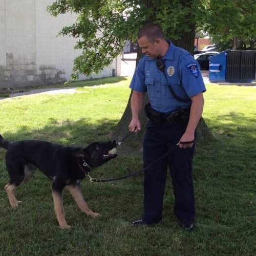 K-9 Training Director Says Police Dogs Would Have to be Killed if Illinois Legalizes Pot