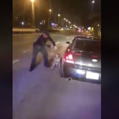 WATCH: K-9 Cop Reassigned After He's Caught on Camera Abusing Dog For Not Finding Drugs