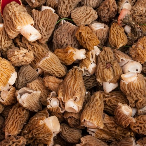 Man Reports Police Visitation After Posting Pictures of Morel Mushrooms on Facebook