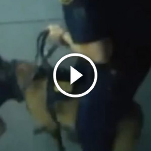 WATCH: Police Dog Attacks Innocent Child