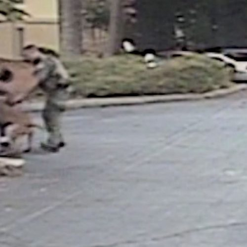 WATCH: Teen Following Police Commands is Brutally Attacked by Roswell K-9