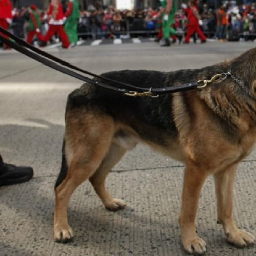 Bomb-Sniffing K-9 Dies in Hot Patrol Car While Handler Was on Lunch Break